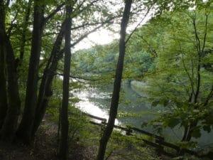 Blick auf den Saufangweiher
