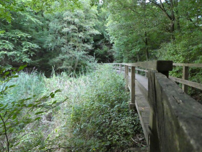 Forest, bridge, booze