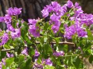 Botanik an der Costa Brava