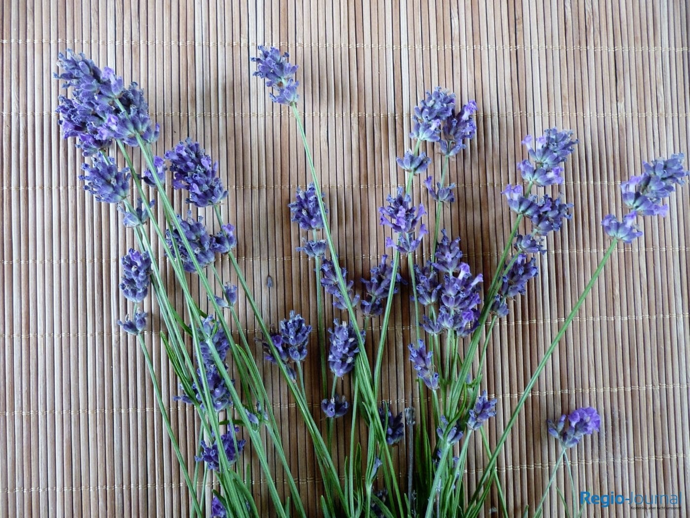 Wissenswertes über Lavendel