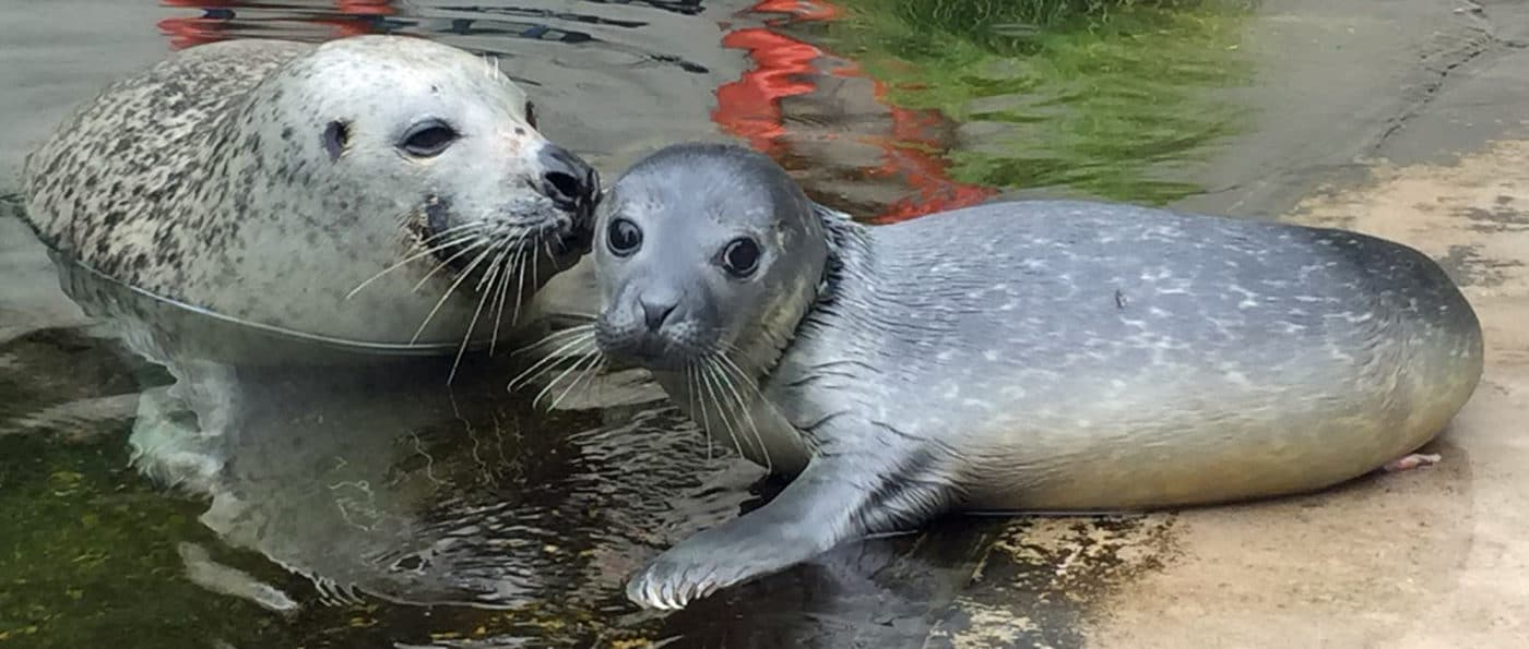 Süßer Nachwuchs im Zoo Saarbrücken