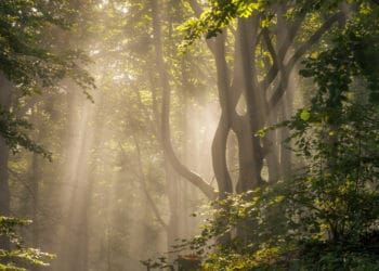 Ein Waldstück in der Morgensonne   Bild: Regio-Journal