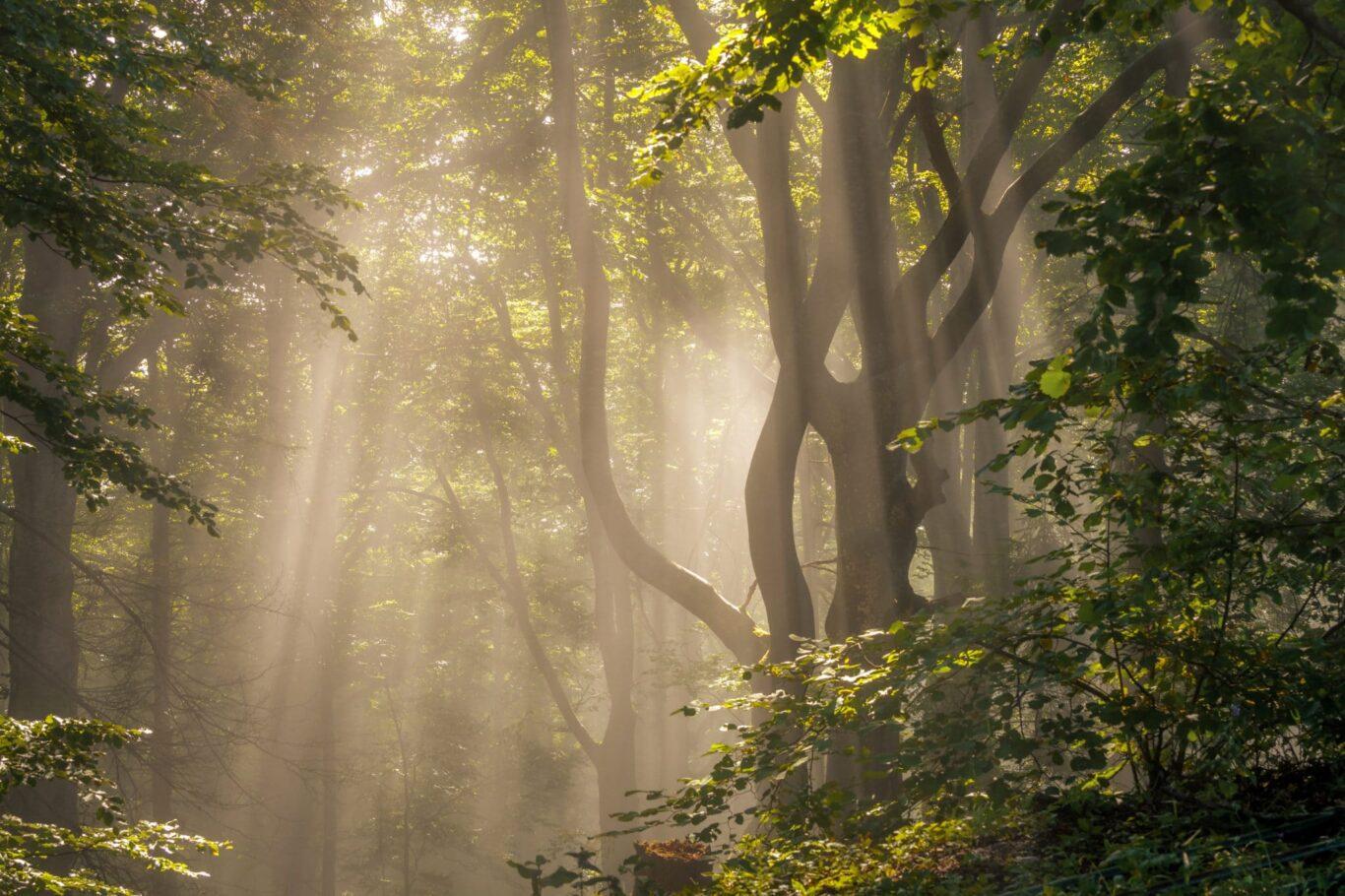 Ein Waldstück in der Morgensonne | Bild: Regio-Journal