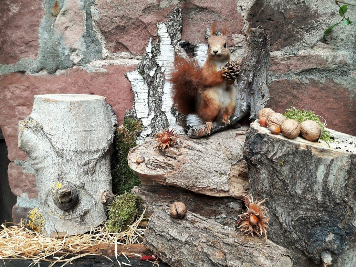 Ein Eichhörnchen in Nahaufnahme | Bild: F.M. / Regio-Journal