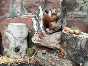 Close - up of a squirrel Picture: FM / Regio-Journal