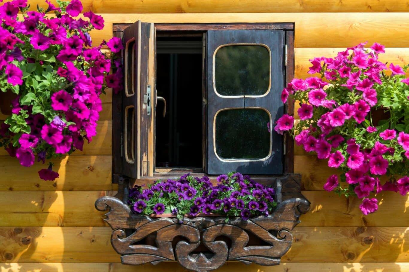 Offenes Fenster mit Blumen ...