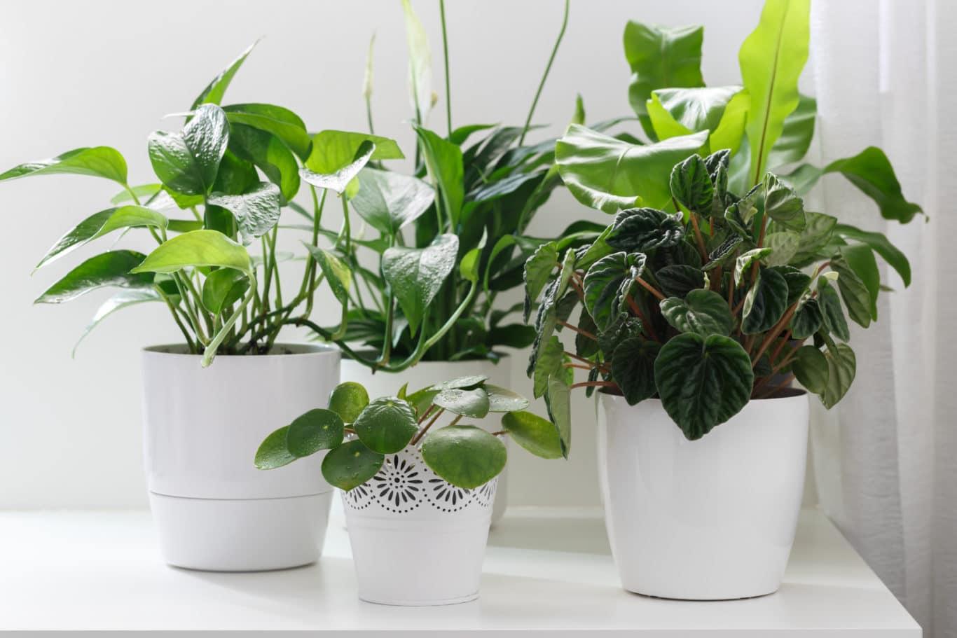 Gutes Raumklima durch Pflanzen