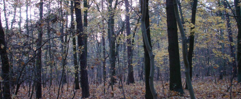 Bosque, sobre dts