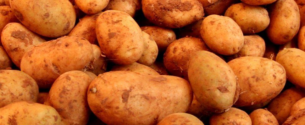 Kartoffeln, über dts