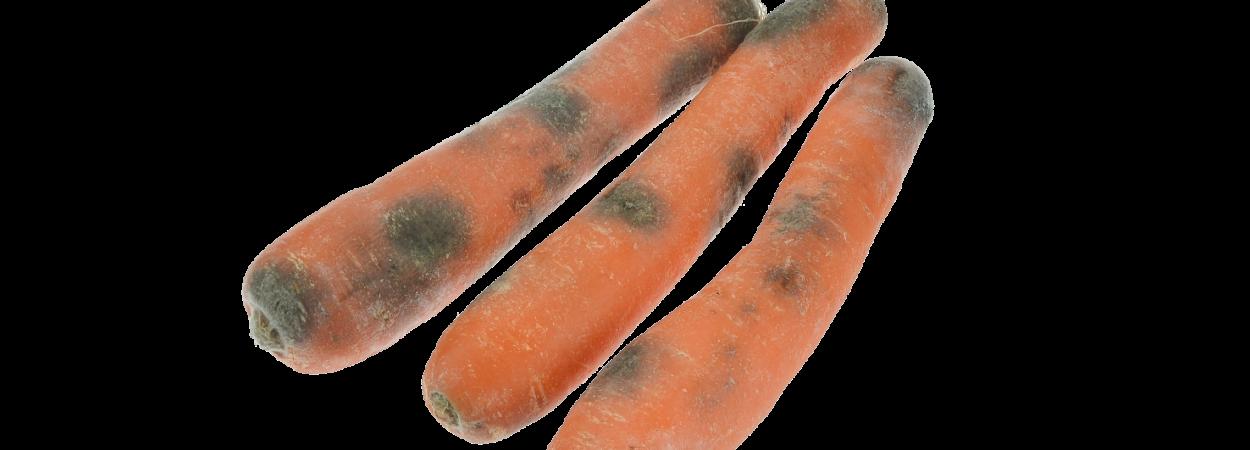 Verdorbene Karotten - ab in den Müll!